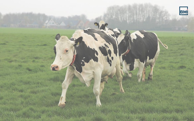Voorbeeld advertising melkveehouderij eemsbroek